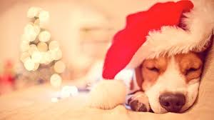 dog christmas 21 puppies who are so ready for christmas entertainment tonight