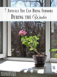 Winter Indoor Garden - 31 best cold weather gardening images on pinterest organic
