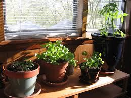 small indoor garden ideas landscaping gardening ideas