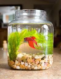 Christmas Decorations Lights In A Bowl by Best 25 Fish Bowl Decorations Ideas On Pinterest Fish Tank