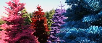 henderberg s trees and wreaths rome ny home