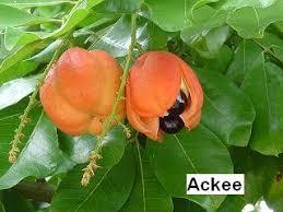 Ackee Fruit Tree - genus blighia the worldwide fruits