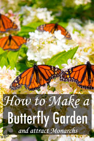 how to make a butterfly garden and other ways to help save