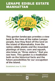 edible native plants gardenlab lenape edible estate manhattan