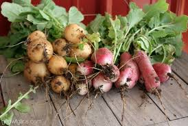 Zone Gardening - growing fall vegetables what you need to know