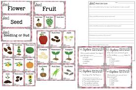 100 flower life cycle worksheet best 25 life cycle of