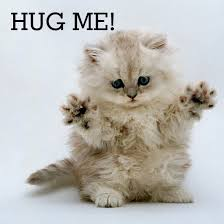 Cat Hug Meme - june 4th is hug your cat day fun goods for awesome living