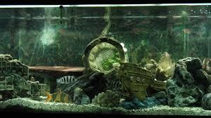cichlids tank exles