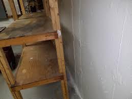 dighton ma basement mold removal moldguys restoration
