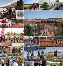 carlsbad flower garden attractions u0026 events flower fields
