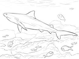 realistic bull shark coloring free printable coloring pages