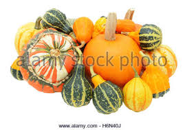 ornamental gourds or fall squash on the striped tablecloth stock