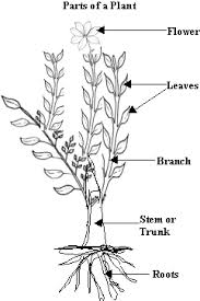 parts of a plant upper elementary science i kwiznet math
