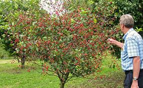 all about fruit trees stark bro s