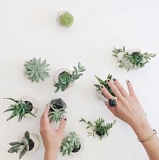 Gorgeous Ways To Decorate With Plants Melyssa Griffin - Home decoration plants