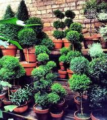 Ny Topiary - 9c9f48d68da0b246d7c9909a7e30c125 jpg 736 985 topiaries and