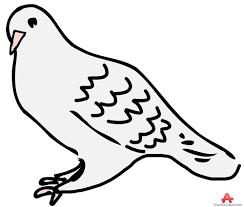 pigeon clip art clipartandscrap