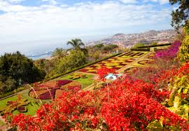 Madeira Flowers - madeira for insiders the unknown side of the volcanic island