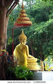 buddha bodhi tree stock images royalty free images vectors