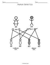 human genetics crossword puzzle by teaching tykes tpt
