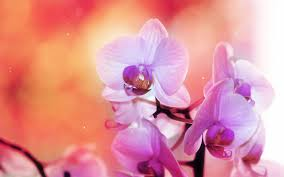 Blue And Purple Flowers Blue And Purple Orchids Wallpaper