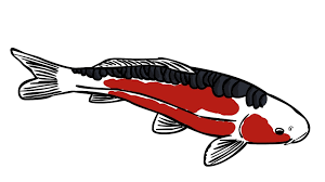 koi carp tattoo images drawn koi fish face pencil and in color drawn koi fish face