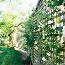 lattice fences with climbing plants lattice fences gallery