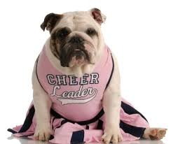 Cheerleader Costume Halloween Dog Cheerleader Costumes Cheerleader Costumes Dogs