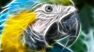 imagenes abstractas hd de animales wallpapers hd de animales abstractos lanaturaleza es