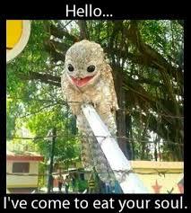 Potoo Bird Meme - ah the potoo bird mu new fav birdy i want one its so cute