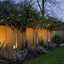 Tree Ideas For Backyard Modern Uplighting Outdoor Pictures Privacy Fence Landscaping