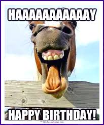 Birthday Animal Meme - happy birthday memes with funny cats dogs and cute animals