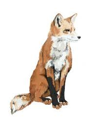 the 25 best fox drawing ideas on pinterest fox tattoos fox and