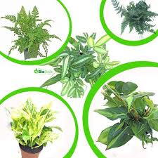Tropical Plants Pictures - shop for tropical plants at thebiodude