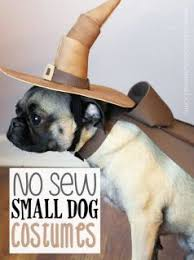 Dog Halloween Costumes 25 Small Dog Costumes Ideas Wiener Dogs