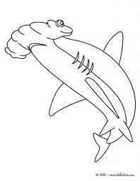 hammerhead shark coloring pages vidopedia vidopedia