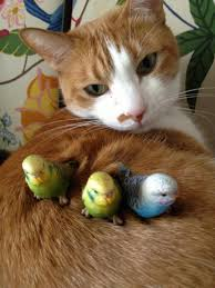 cat and bird friends awe pinterest bird cat and animal