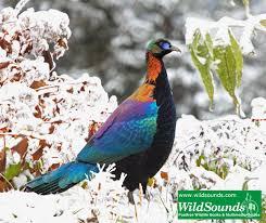 sichuan birds october 2010