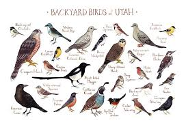 Backyard Bird Store Backyard Birds Of Utah U2013 Heirloom Art U0026 Co