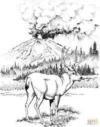 mule deer coloring pages free coloring pages