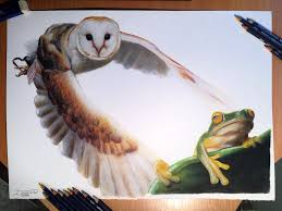 owl frog color pencil drawing by atomiccircus on deviantart