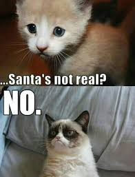 95 best grumpy cat images on pinterest grumpy cat funny things