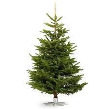 10ft christmas tree nordmann fir real christmas tree fresh cut no mess 4 10ft