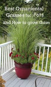 Potted Plants For Patio Best 25 Patio Plants Ideas On Pinterest Midge Repellent Potted