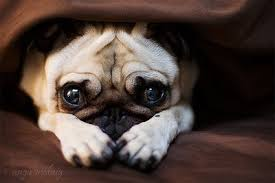 Puppy Face Meme - puppy dog face meme keywords and pictures