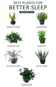 best light for plants great indoor plants 5 best low light indoor plants great indoor low
