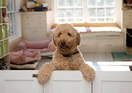 dog photo album photo album at home vet care