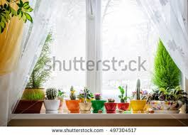 window table for plants house plants on window stock photo royalty free 497304517