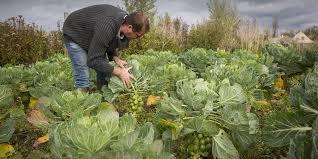 l apprentissage agricole dans les hauts de version longue soutien renforcé à l agriculture région hauts de