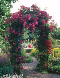 rose arches dublin classic garden elements